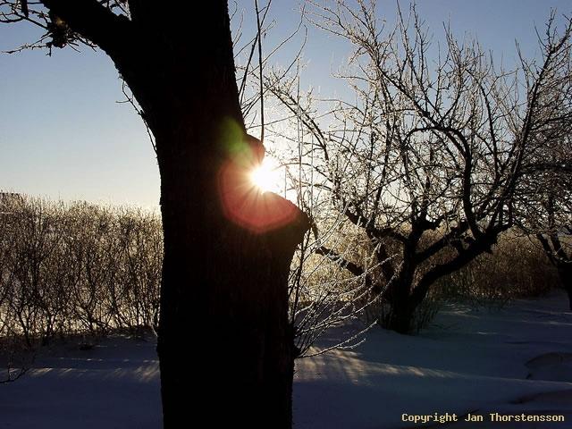 Kall vintermorgon