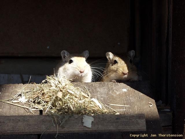 Bosse & Bertil möter våren