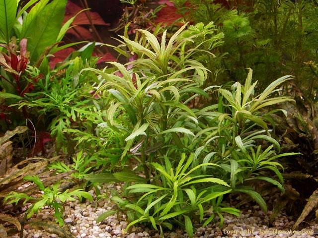 Lite nya växter