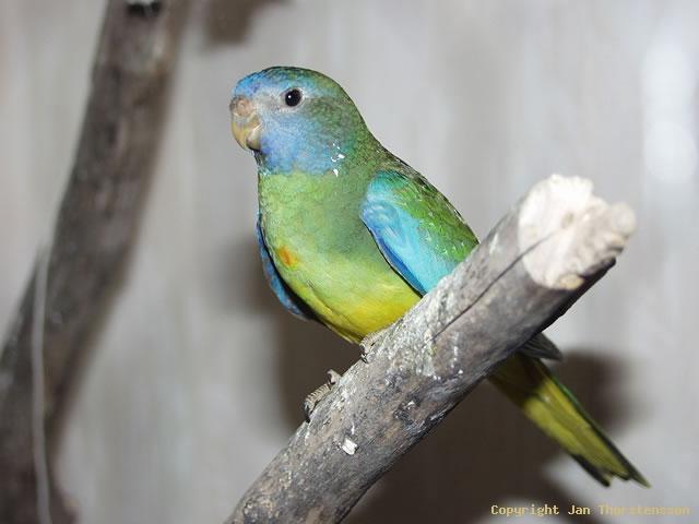 Nya fåglar