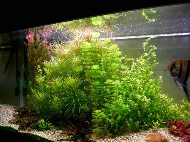 Full fart i växtburken