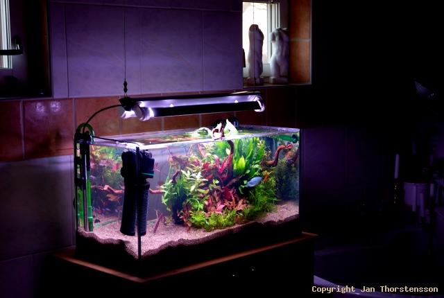 Akvarieprojektet fortsätter