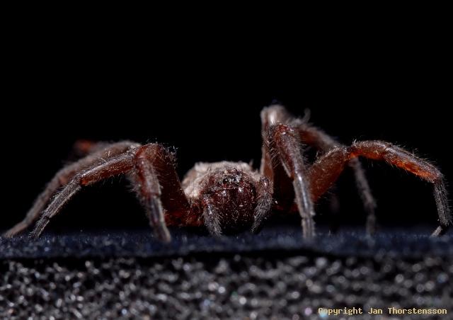 Imse vimse spindel…