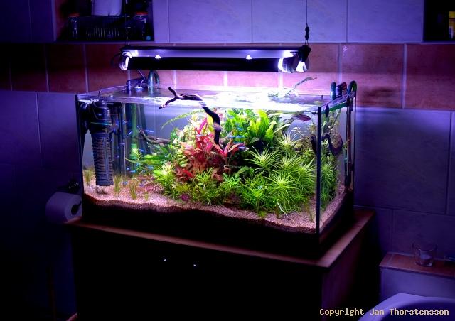 Akvarieuppdatering