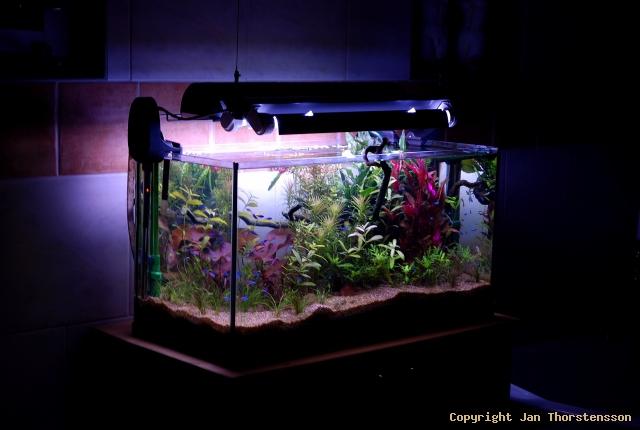 Ny akvariesetup