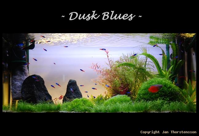 Dusk Blues