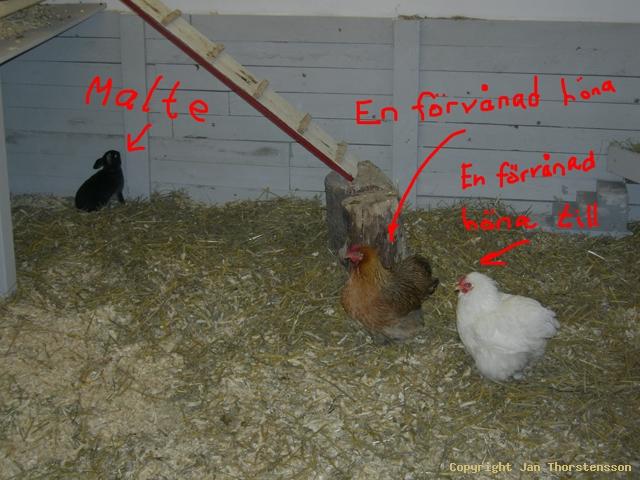 Nytt på farmen del 2