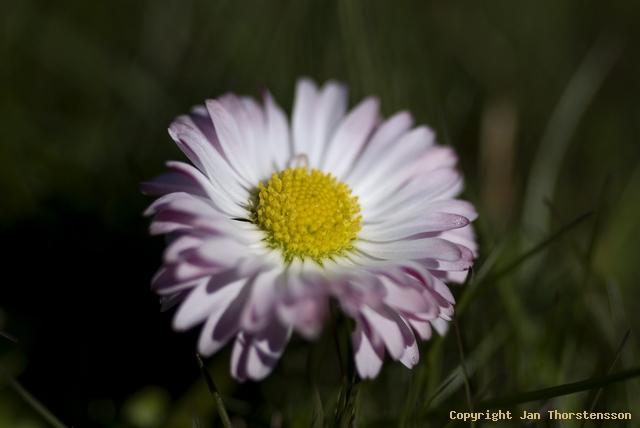 Makrofotografering i trädgården