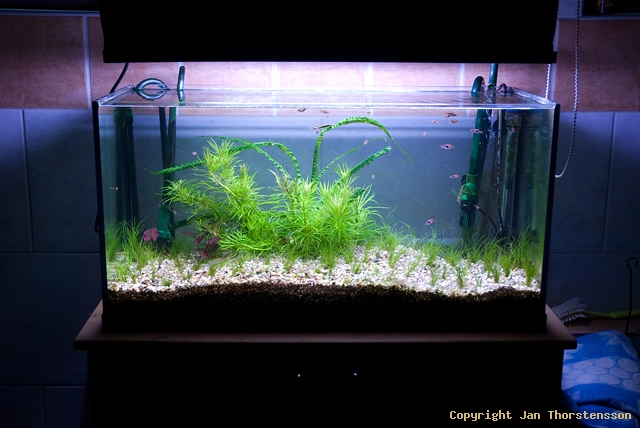 Akvariestatus – mindre omstart