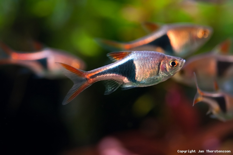 Akvariekonvertering – del 4