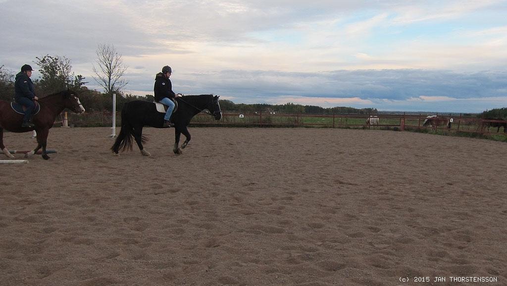 Om hästar kunde tala